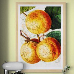 Peaches Nature & Creatures