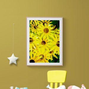 Daisies Floral
