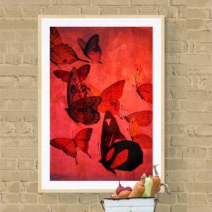 Butterflies Red Nature & Creatures