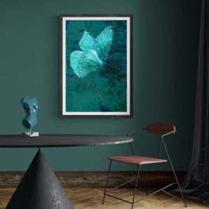 Butterfly in Teal Nature & Creatures