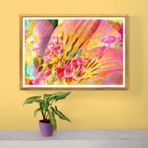 Exuberance Floral