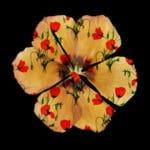 Flower-Fashion2