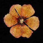 Flower-Fashion5