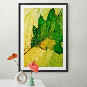 Leaf Nature & Creatures